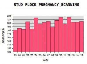 Glenview Stud Flock Pregnancy Scanning