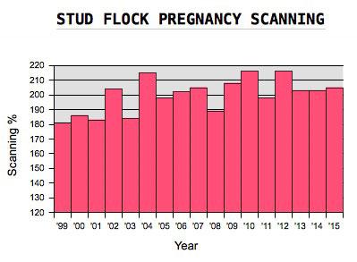 Glenview Stud Flock Pregnancy Scanning