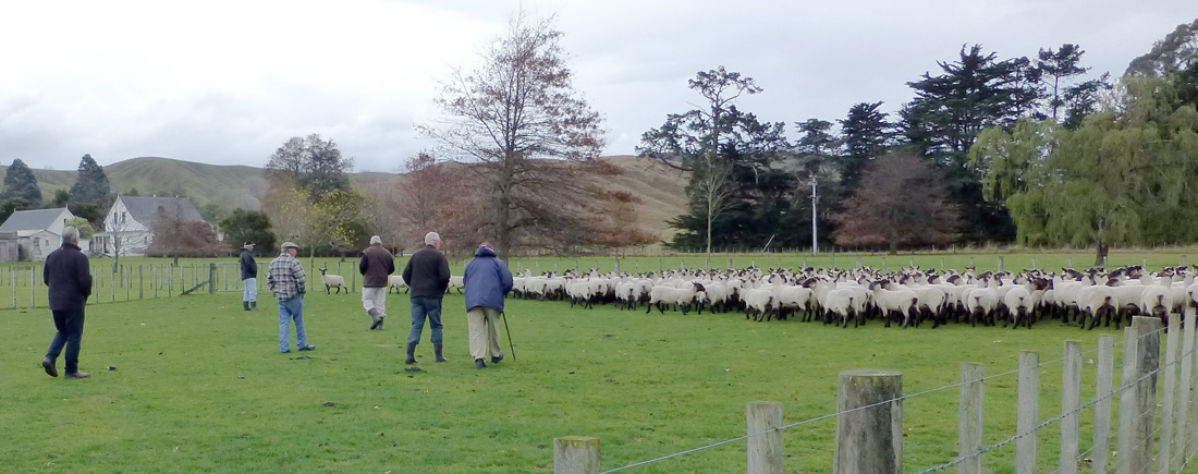 Glenview Wairarapa South Suffolks